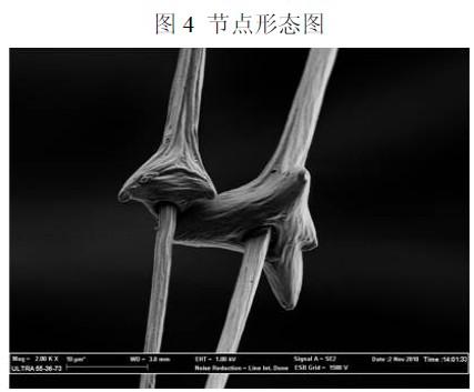 鹅的头部结构图